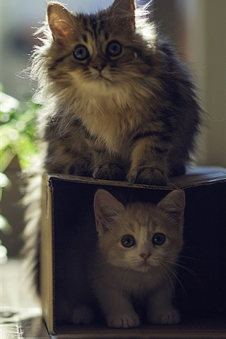 iPhone Wallpaper Cat with kitten, house, box