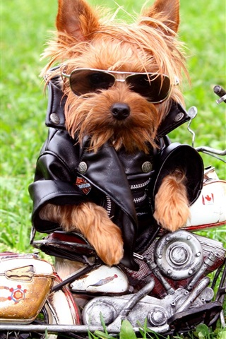 iPhone Wallpaper Dog motorcycle riders