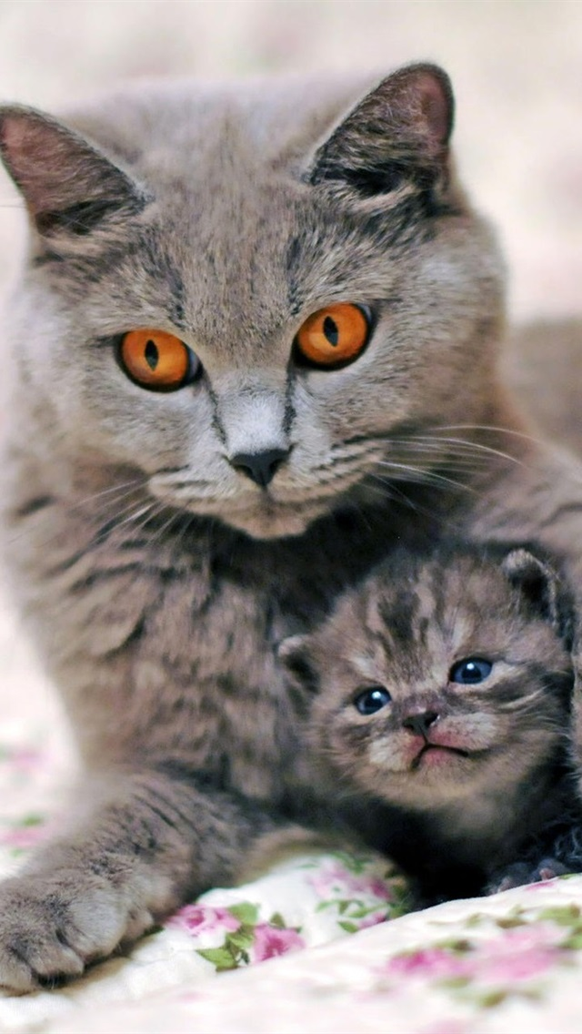 Wallpaper Gray Cat Mother With Kitten 1920x1200 Hd Picture