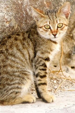 iPhone Wallpaper Gray striped kitten look back