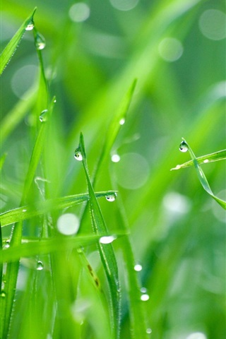 Green Grass After Rain 640x1136 Iphone 5 5s 5c Se Wallpaper