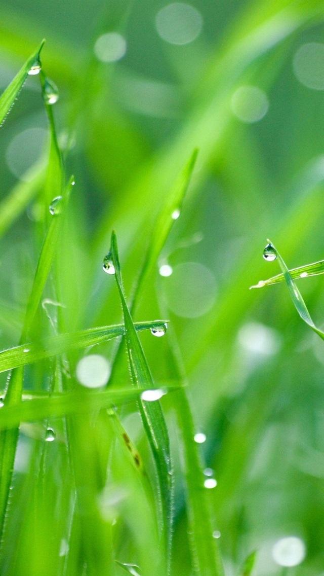 Green Grass After Rain 640x1136 Iphone 5 5s 5c Se Wallpaper