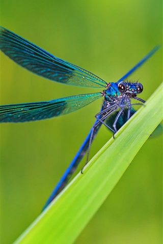 iPhone Wallpaper Green grass, leaves, blue dragonfly