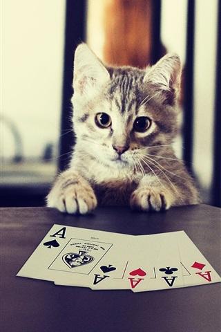 iPhone Wallpaper Kitten playing poker