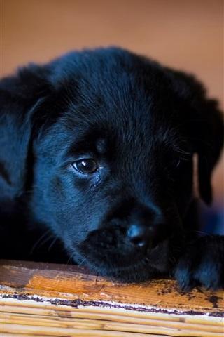 iPhone Wallpaper Little dog, black puppy