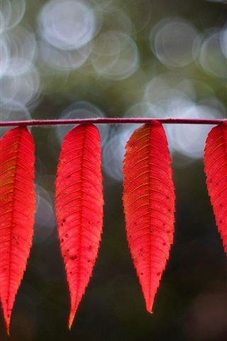 iPhone Wallpaper Red elongated leaves, bokeh