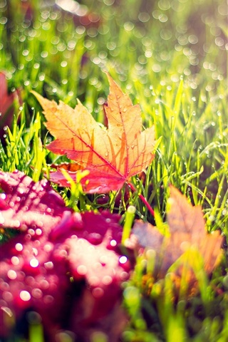 iPhone Wallpaper Yellow red leaves, green grass, dew