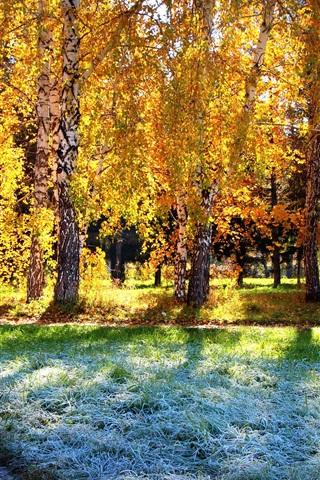 iPhone Wallpaper Birch forest, autumn sunshine