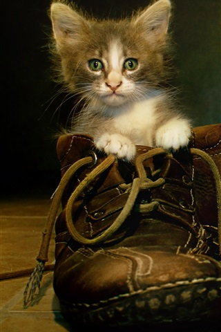 iPhone Wallpaper Cat in boots