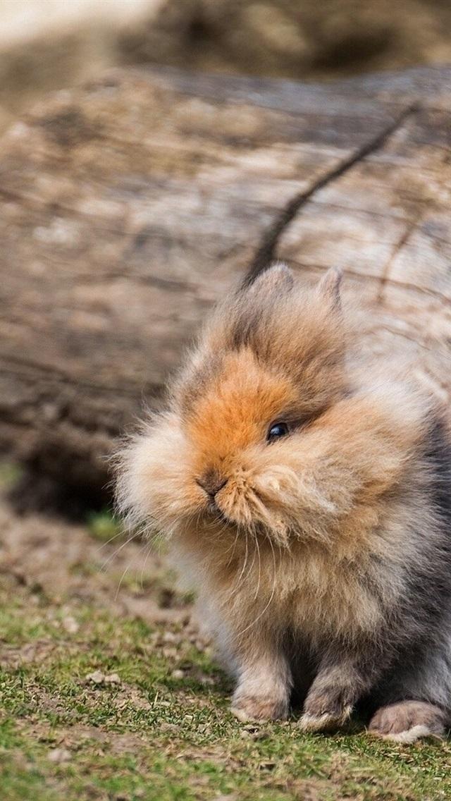 Cute Fluffy Rabbit 640x1136 Iphone 5 5s 5c Se Wallpaper