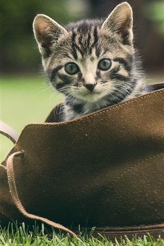 iPhone Wallpaper Cute kitten, shoes, green grass
