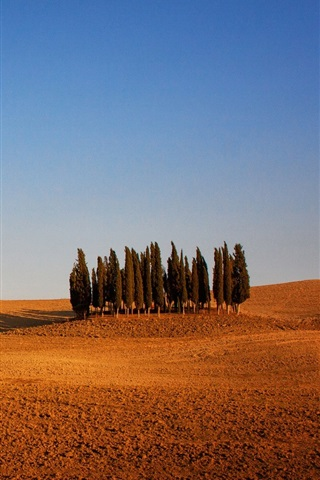 iPhone Wallpaper Italy, Tuscany, arable land, trees, sky, dry weather