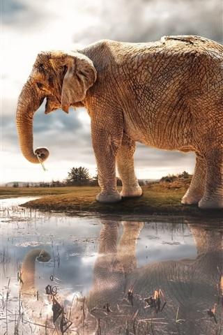 iPhone Wallpaper Lake, water reflection, elephant, giraffe, river