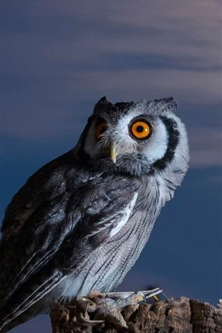 iPhone Wallpaper Owl, moon, bird at night
