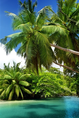 iPhone Wallpaper Palm trees, tropical, sea, blue water, summer