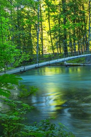iPhone Wallpaper River, forest, bridge, summer, nature scenery