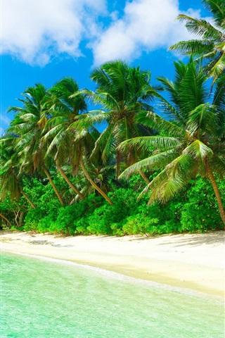 トロピカル 楽園 ビーチ 海岸 海 ヤシの木 夏 750x1334 Iphone 8 7 6 6s 壁紙 背景 画像