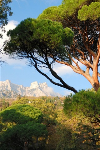 iPhone Wallpaper Ukraine, Crimea, trees, mountains, park, nature