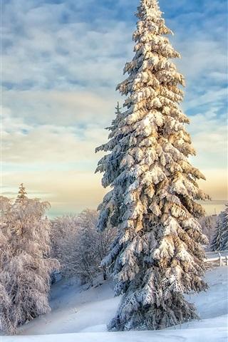 iPhone Wallpaper White winter, snow, trees