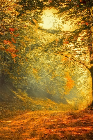 iPhone Wallpaper Autumn, forest, road, trees, sunlight