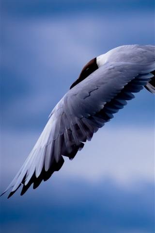 iPhone Wallpaper Birds, seagull, flying, blue sky