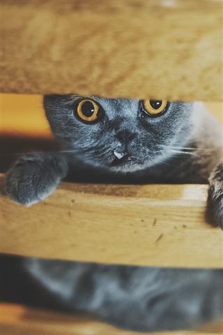 iPhone Wallpaper Black kitten on chair to look