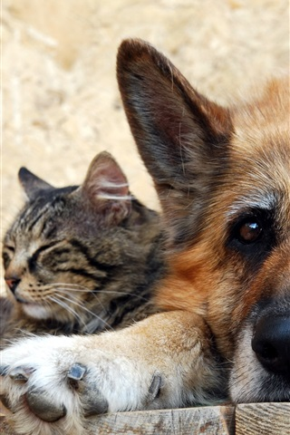 iPhone Wallpaper Cat with dog, friendship