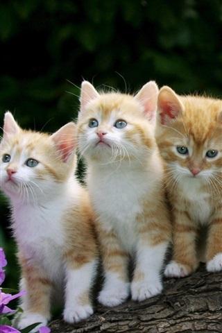 iPhone Wallpaper Cute kittens, furry, flowers