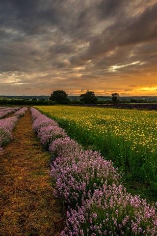 iPhone Wallpaper England, UK, Hampshire, fields, flowers, lavender, night, sunset
