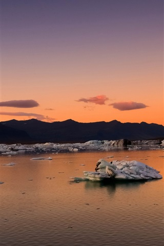 iPhone Wallpaper Iceland, mountains, bay, ice floes, morning