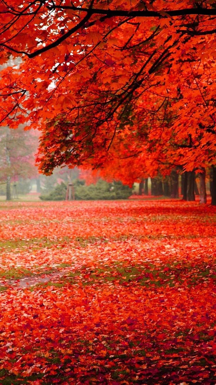 自然の風景 公園 秋 赤 紅葉 750x1334 Iphone 8 7 6 6s 壁紙 背景