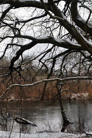 iPhone Wallpaper Tree, river, snow, winter, dry
