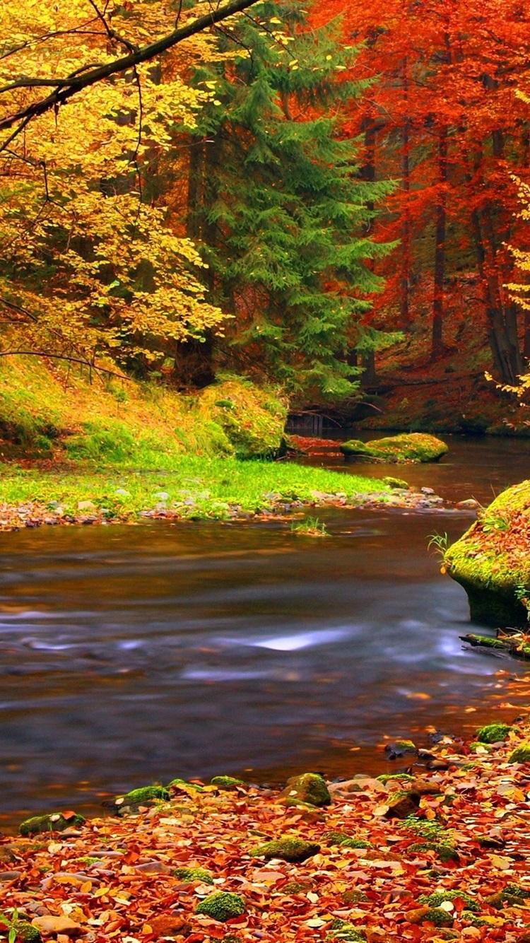 foto de Fonds d'écran Automne, forêt, arbres, feuilles, rivière 750x1334 ...