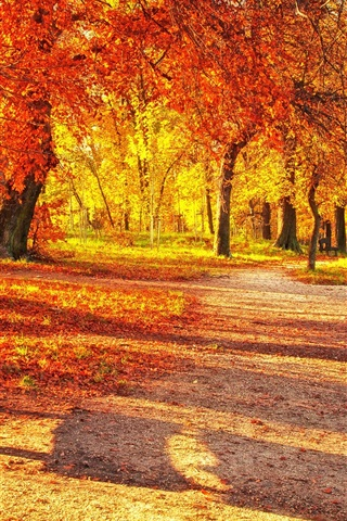 iPhone Wallpaper Autumn park, red leaves, wood bench, sunlight