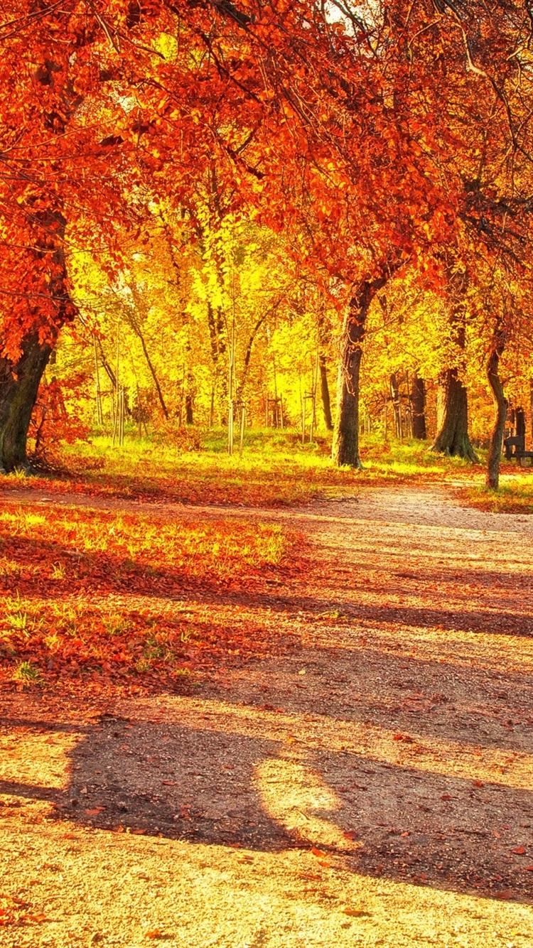 秋の公園 紅葉 木のベンチ 日光 750x1334 Iphone 8 7 6 6s 壁紙