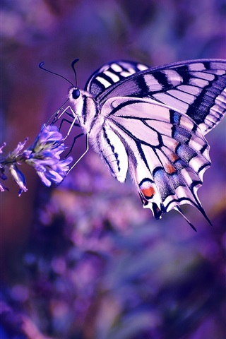 iPhone Wallpaper Butterfly, flowers, insect, plant, purple background