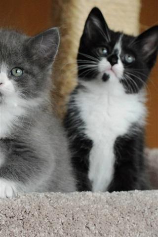 iPhone Wallpaper Cute kittens, eyes, faces, white black