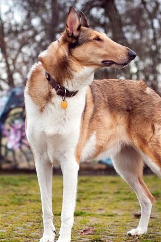 iPhone Wallpaper Dog, summer, bokeh