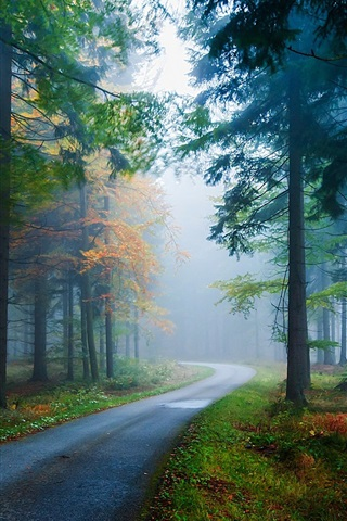 iPhone Wallpaper Forest, pine, spruce, road, fog, trees, autumn, nature