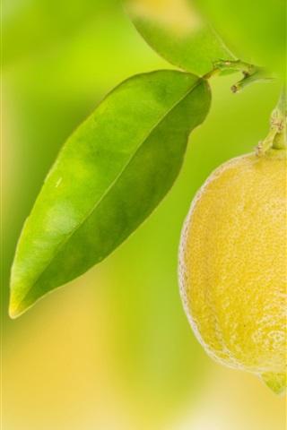 iPhone Wallpaper Fruit, yellow lemon, leaves, bokeh