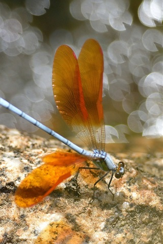 iPhone Wallpaper Insect, dragonfly, wings, orange, glare, stones