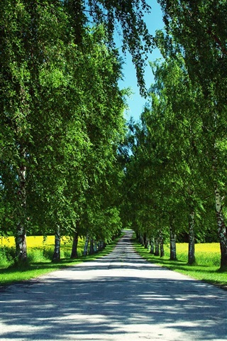 iPhone Wallpaper Norway nature summer, road, canola fields, birch trees, shadows