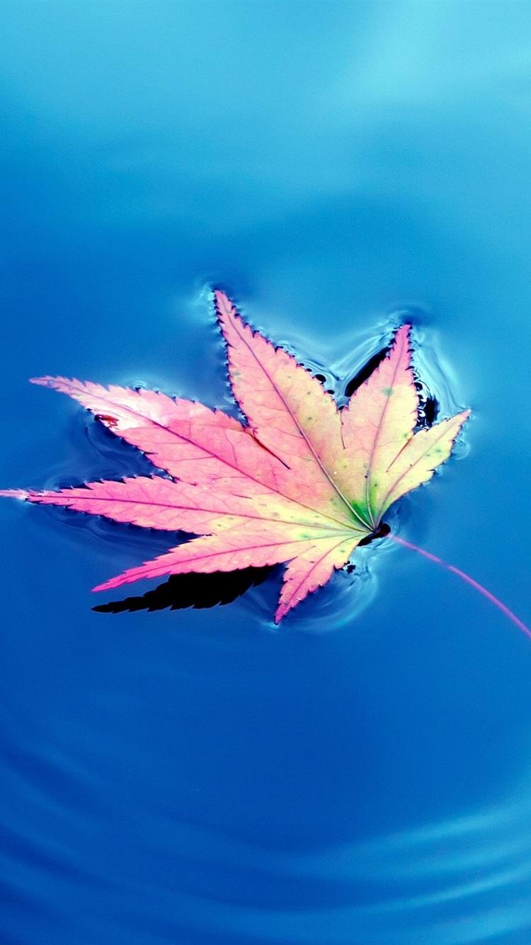 ワンピースカエデの葉 青い湖の水 750x1334 Iphone 8 7 6 6s 壁紙 背景 画像