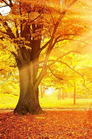 iPhone Обои Закат осень, лес, желтые листья, деревья, солнце
