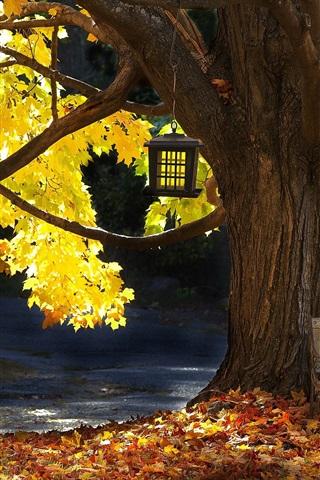 iPhone Wallpaper Tree, bench, autumn, leaves, sunlight