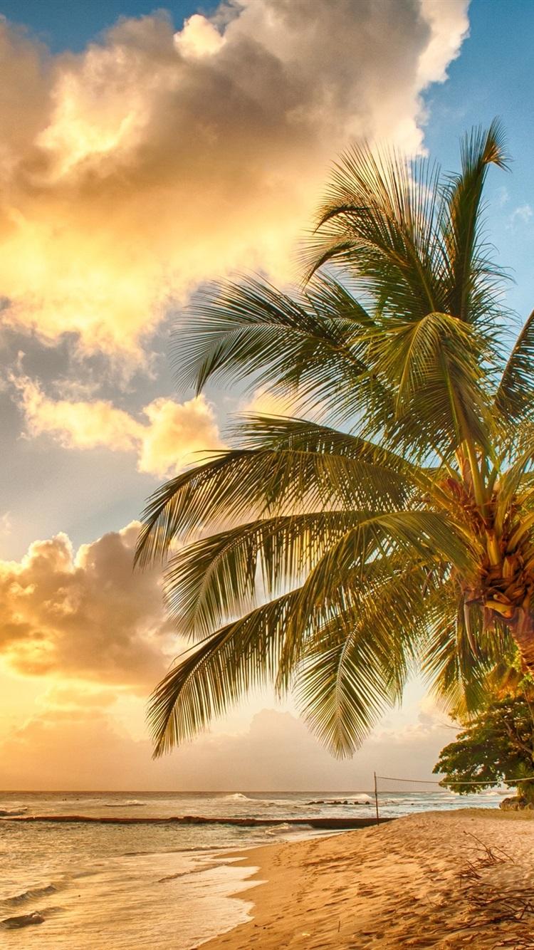 壁紙 トロピカル 楽園 ビーチ ヤシの木 海 海 夕日 2560x1600 Hd 無料のデスクトップの背景 画像