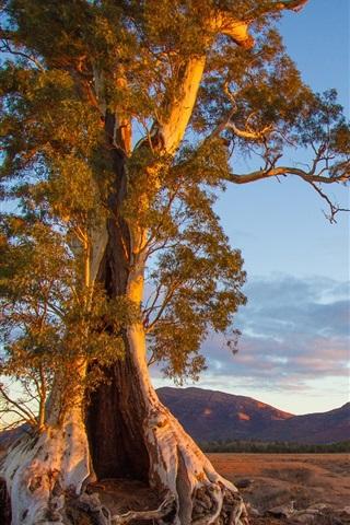 iPhone Wallpaper Australia, nature scenery, tree, mountain, evening