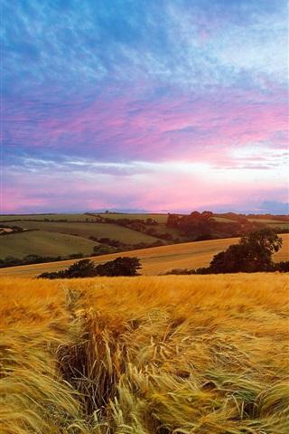 iPhone Wallpaper Fields, sky, summer, nature landscape