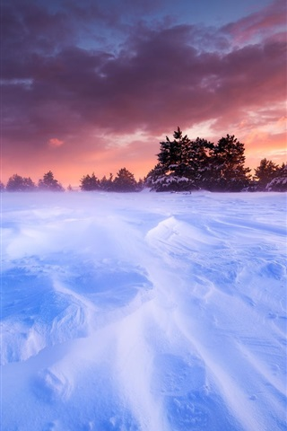 iPhone Wallpaper France, Provence, plains, snow, winter, trees, sunset