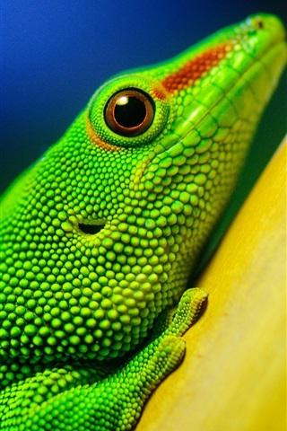 iPhone Wallpaper Green lizard, yellow branches, bokeh